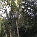 Dlinza Forest照片
