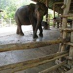 ภาพถ่ายของ ปางช้างแม่ตะมาน
