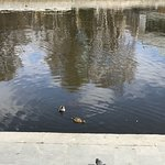 Photo de Weir on river Iset