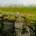 Two Puffins having a chat at Engey