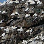 Bird Safariの写真