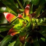 Há plantas muito diferentes e bonitas no decorrer da trilha