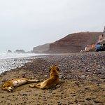 Legzira Beach / Hunde