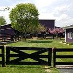 Foto de White Oak Lavender Farm