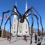 Splendid Arachnid