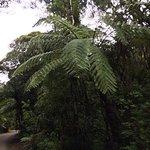 Waipoua Forest - winding roads