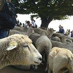 ภาพถ่ายของ Mother Farm