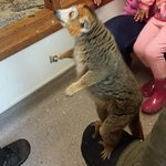 Foto di Linton Zoo
