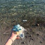Raccogliendo plastica dalla battigia