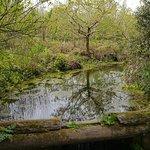صورة فوتوغرافية لـ Wildwood Escot