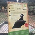 vulture signboard