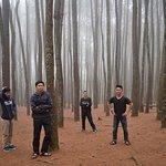 suasana hutan pinus di pagi hari