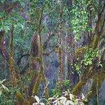 Photo of Chirripo National Park