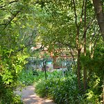 A glimpse of the pool through our garden paths
