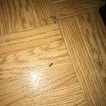 Baby roaches