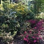 Photo of Arboretum Bolestraszyce