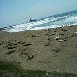 More Seals Napping