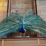 Smithsonian Institution Building – fotografia