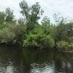 Perfect private tour and we have seen alligators in the nature!