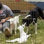 Dog taking care of the newborn kids