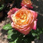 Foto de Jardín Botánico de Tucson
