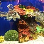 صورة فوتوغرافية لـ Shanghai Ocean Aquarium