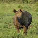 Rhinocéros à Khoka Moya