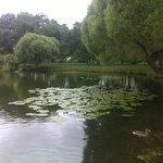 Ольгин пруд на берегу которого стоит Собор Петра и Павла