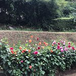 صورة فوتوغرافية لـ Hakgala Botanic Gardens