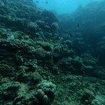 صورة فوتوغرافية لـ Divers Community Club