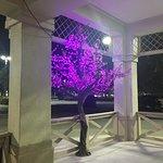 Lighted Sakura Tree