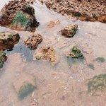Billede af Exmouth Beach