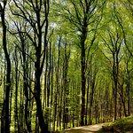 Photo of Nationalpark Jasmund Konigsstuhl