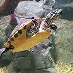 Foto de St Andrews Aquarium