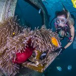 Diver and Fish Eye Underwater Observatory