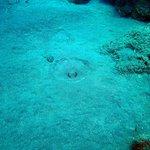 Photo of Saba Divers