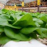 ภาพถ่ายของ Big Red Strawberry Farm