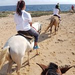 Horse riding track by sea