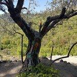 Bilde fra Ruta Asentadero - Bosque de Los Espejos