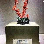 数年前に日本のニュースで問題視されましたね、赤サンゴです。とっても高価です。