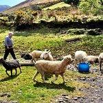 Foto van The Kerry Way