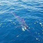 Puerto Vallarta fishing report marlin