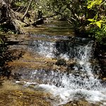 Фотография Yellow Branch Falls