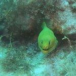 Foto de Ocean Divers