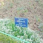 صورة فوتوغرافية لـ Mughal Garden