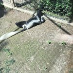 Parco Faunistico Cappeller照片