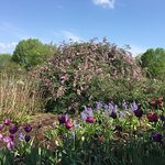 Фотография The Arboretum