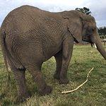 Foto de Knysna Elephant Park