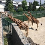 Photo de Knies Kinderzoo Rapperswil
