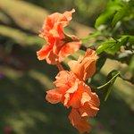 Flores da Varanda